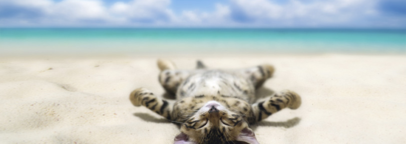 Deep Relaxation Techniques Mindyourmind Ca